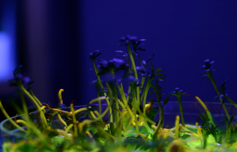 The Sensorial Invisibility of Plants by Laura Cinti