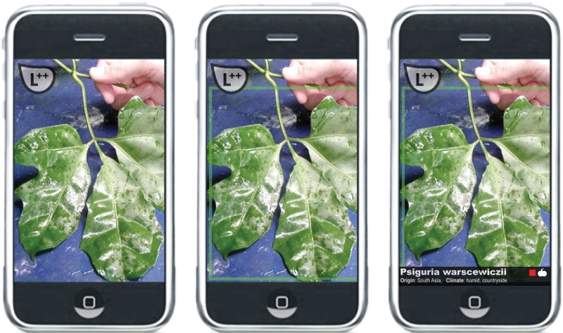 Leaf++, 2011, FakePress Publishing. Augmented Reality and leaves. Image courtesy of the authors.